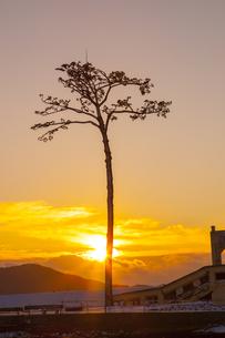 陸前高田市 奇跡の一本松の写真素材 [FYI00249606]