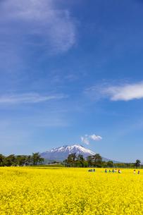 岩手山と菜の花畑の写真素材 [FYI00249608]