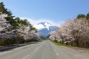 八幡平 桜並木と岩手山の写真素材 [FYI00249626]