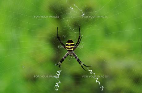 蜘蛛の写真素材 [FYI00249947]