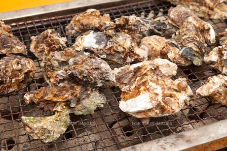 牡蠣焼きの素材 [FYI00249956]