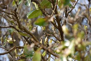 野鳥の写真素材 [FYI00250376]