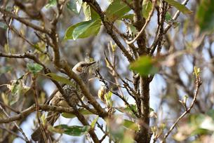 野鳥と自然の写真素材 [FYI00250377]