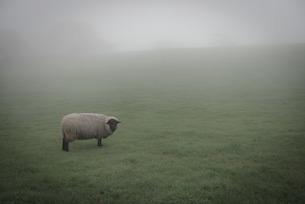 夢の中の羊の素材 [FYI00250406]