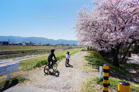 満開の桜と富士山を眺めてサイクリングする子どもの写真素材 [FYI00250650]