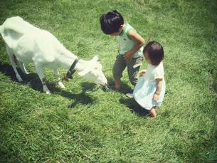 草原にいるヤギと触れ合う少年少女の素材 [FYI00250665]