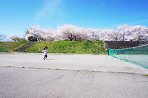 桜の木々の下でテニスをする少女の写真素材 [FYI00250678]