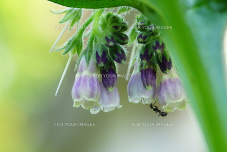 花とアリの写真素材 [FYI00250941]