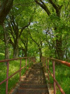 林の中の階段の写真素材 [FYI00251072]