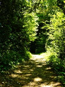 森の出口の写真素材 [FYI00251083]