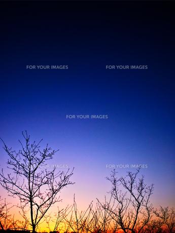 森の夜明けの素材 [FYI00251102]