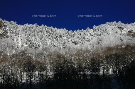 初冬の山の素材 [FYI00251401]