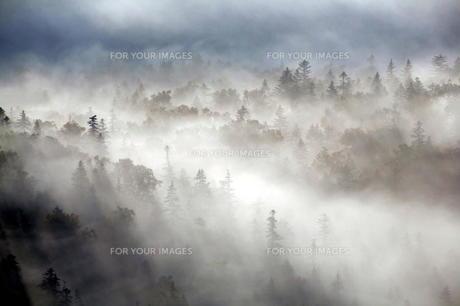 森に漂う霧の素材 [FYI00251409]