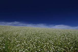 そば畑と青い空の素材 [FYI00251431]