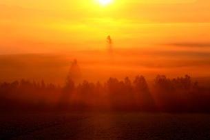 秋の朝光の写真素材 [FYI00251435]