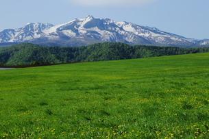 草原と大雪山の写真素材 [FYI00251440]