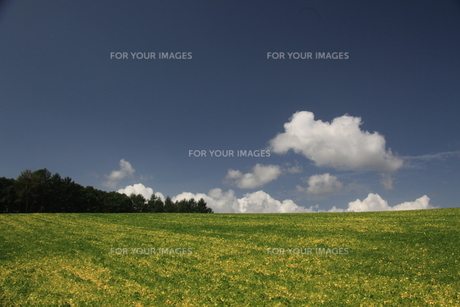 あずき畑と白い雲の素材 [FYI00251450]