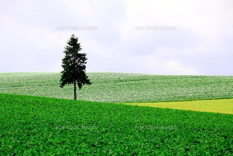 夏の丘の素材 [FYI00251462]