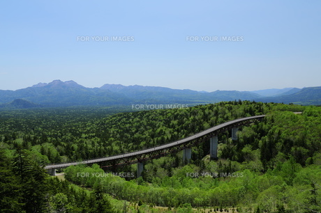 樹海に架かる橋の素材 [FYI00251472]
