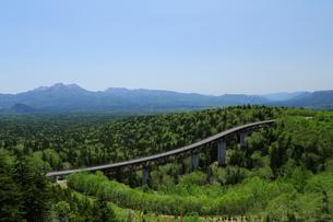 樹海に架かる橋の写真素材 [FYI00251472]