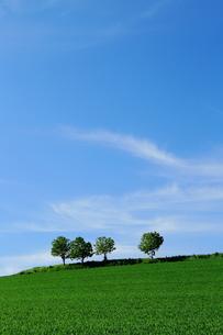 春のそよ風の写真素材 [FYI00251475]