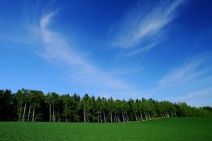 雲遊ぶ丘の写真素材 [FYI00251491]