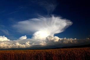 夏のきのこ雲の写真素材 [FYI00251494]
