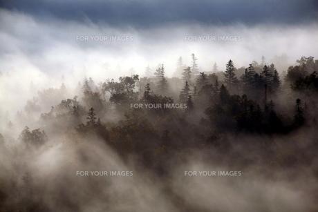 大雪山の秋霧の素材 [FYI00251496]
