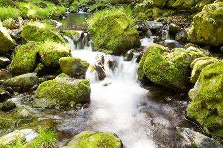 渓流の写真素材 [FYI00251499]