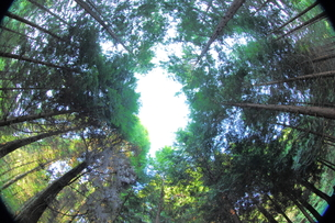 森の出口の写真素材 [FYI00251532]