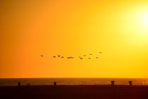 夕暮れの渚を飛ぶ鳥の群れの写真素材 [FYI00251594]