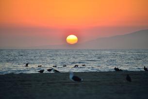 夕日と鳥の写真素材 [FYI00251628]