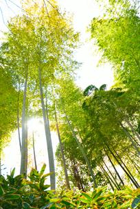 竹林の写真素材 [FYI00251658]