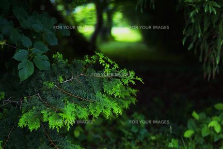 緑の中での写真素材 [FYI00251671]