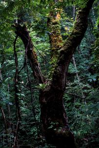 緑の原木の写真素材 [FYI00251681]