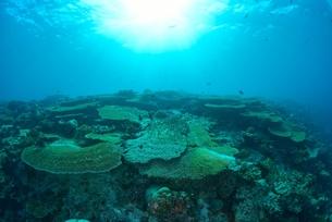 珊瑚の群生の写真素材 [FYI00252129]