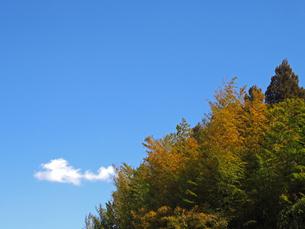 青空と、春の木々の素材 [FYI00252273]