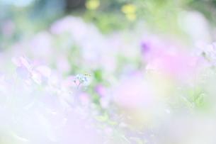 小さな花と小さな蜂の写真素材 [FYI00252625]