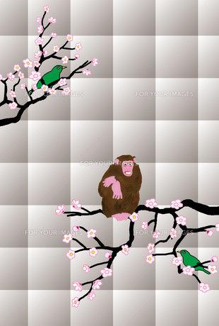 梅の木のサルと鶯のイラスト年賀葉書の写真素材 [FYI00252762]