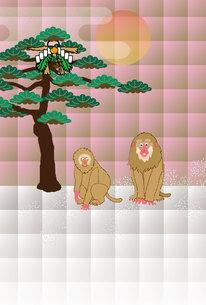 猿と松の木の和風ポップなイラスト年賀はがきの写真素材 [FYI00252773]