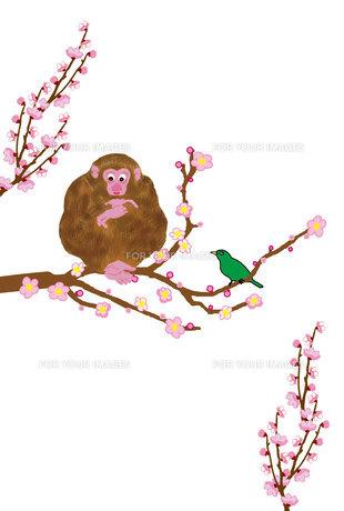 ピンクの梅の花に鶯とサルの葉書の写真素材 [FYI00252774]
