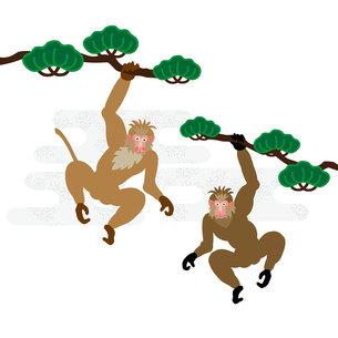 男らしい二匹のサルと松の木のイラスト素材の写真素材 [FYI00252853]