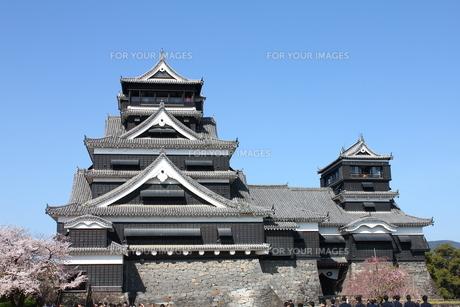熊本城天守閣と満開の桜の写真素材 [FYI00253177]