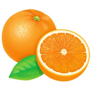 オレンジの写真素材 [FYI00253336]