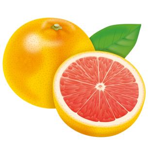 ピンクグレープフルーツの写真素材 [FYI00253364]