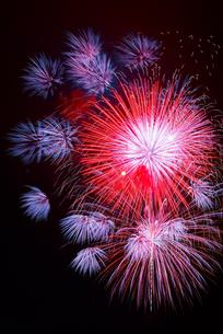 カラフルな花火たちの写真素材 [FYI00253424]