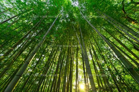竹林の中のでの写真素材 [FYI00253452]