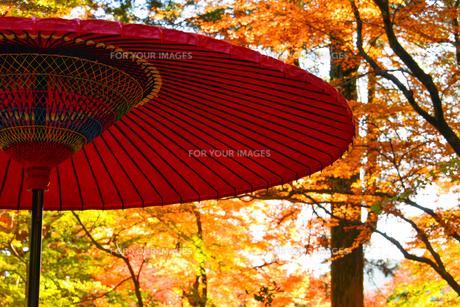 伝統的な赤い和傘の素材 [FYI00253468]