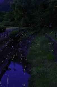 ホタルと川の写真素材 [FYI00253873]