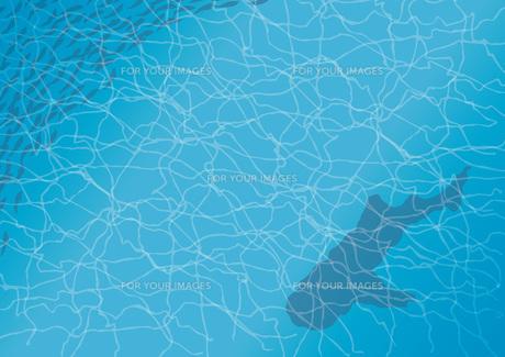 ジンベイザメと魚の写真素材 [FYI00254127]